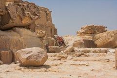 Πυραμίδες καμηλών και Giza Στοκ Εικόνες