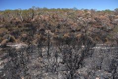 Πυρκαγιά θάμνων της Αυστραλίας: μμένη βουνοπλαγιά χ Στοκ Εικόνες
