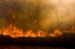 πυρκαγιά θάμνων Στοκ Εικόνες