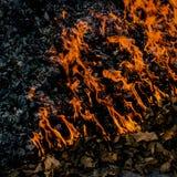 Πυρκαγιά και κάψιμο τέφρας του φυλλώματος φθινοπώρου Στοκ φωτογραφίες με δικαίωμα ελεύθερης χρήσης