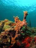 πυρκαγιά κοραλλιών Στοκ φωτογραφία με δικαίωμα ελεύθερης χρήσης