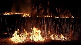 Πυρκαγιά νύχτας στους καλάμους