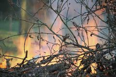 Πυρκαγιά Πάσχας στο gargen στοκ εικόνα με δικαίωμα ελεύθερης χρήσης
