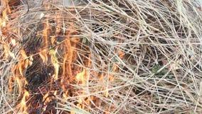 Πυρκαγιά που καίει την ξηρά χλόη αυτό κίνδυνος για το περιβάλλον απόθεμα βίντεο