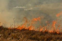 Πυρκαγιά σε έναν τομέα με την ξηρά χλόη Στοκ Εικόνες