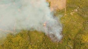 Πυρκαγιά σε έναν τροπικό θάμνο απόθεμα βίντεο