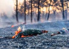 Πυρκαγιά σε ένα δάσος Στοκ φωτογραφία με δικαίωμα ελεύθερης χρήσης