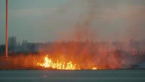 Πυρκαγιά στην άκρη του δρόμου κοντά στο χωριό φιλμ μικρού μήκους