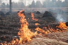 Πυρκαγιά στην ξηρά χλόη Δάσος pazhar στοκ φωτογραφίες με δικαίωμα ελεύθερης χρήσης