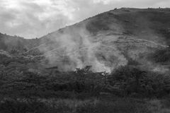 Πυρκαγιά στη βλάστηση Στοκ Εικόνες