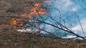 Πυρκαγιά στη δασικούς, καίγοντας ξηρούς χλόη, τα δέντρα, τους θάμνους, και τις θυμωνιές χόρτου με τον καπνό κίνηση αργή απόθεμα βίντεο