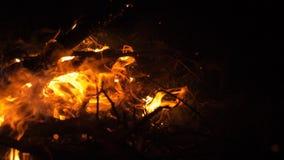 Πυρκαγιά στη φύση Bokeh από την πυρκαγιά απόθεμα βίντεο