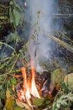 Πυρκαγιά στη χλόη, φωτογραφία κλάδων στοκ φωτογραφία