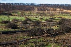 Πυρκαγιά στο δάσος πεύκων Στοκ Εικόνα
