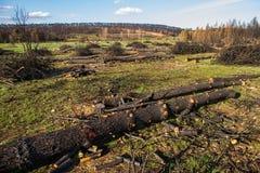 Πυρκαγιά στο δάσος πεύκων Στοκ Εικόνες