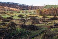 Πυρκαγιά στο δάσος πεύκων Στοκ φωτογραφία με δικαίωμα ελεύθερης χρήσης
