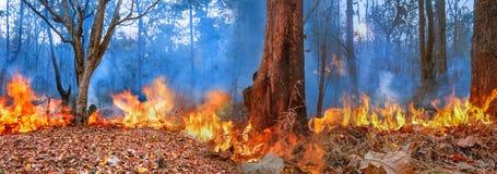 Πυρκαγιά στο βουνό στην Ταϊλάνδη στοκ εικόνες