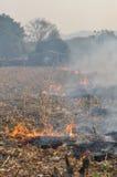 Πυρκαγιά στο πεδίο καλαμποκιού μετά από τη συγκομιδή στοκ φωτογραφίες