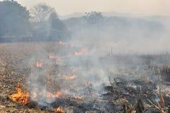 Πυρκαγιά στο πεδίο καλαμποκιού μετά από τη συγκομιδή στοκ φωτογραφία με δικαίωμα ελεύθερης χρήσης