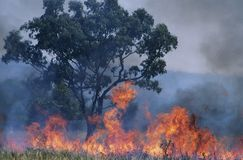 Πυρκαγιά της Αυστραλίας Μπους Στοκ Εικόνες