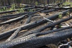 Πυρκαγιά 1143 του Μπους Στοκ φωτογραφίες με δικαίωμα ελεύθερης χρήσης