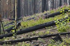 Πυρκαγιά 1142 του Μπους Στοκ φωτογραφίες με δικαίωμα ελεύθερης χρήσης