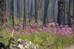 Πυρκαγιά 1105 του Μπους Στοκ Φωτογραφίες