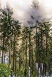 Πυρκαγιά του Μπους Στοκ εικόνες με δικαίωμα ελεύθερης χρήσης