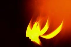 πυρκαγιά Φοίνικας Στοκ φωτογραφίες με δικαίωμα ελεύθερης χρήσης