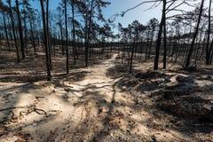 Πυρκαγιές στην Πορτογαλία στοκ φωτογραφίες