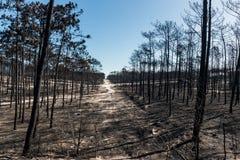 Πυρκαγιές στην Πορτογαλία στοκ εικόνα με δικαίωμα ελεύθερης χρήσης