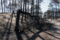 Πυρκαγιές στην Πορτογαλία στοκ εικόνα