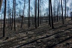 Πυρκαγιές στην Πορτογαλία στοκ φωτογραφία με δικαίωμα ελεύθερης χρήσης