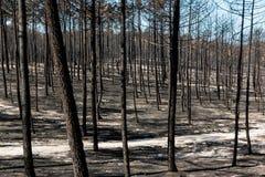 Πυρκαγιές στην Πορτογαλία στοκ εικόνες με δικαίωμα ελεύθερης χρήσης