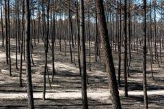 Πυρκαγιές στην Πορτογαλία στοκ φωτογραφίες με δικαίωμα ελεύθερης χρήσης