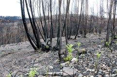 πυρκαγιές Στοκ Εικόνες