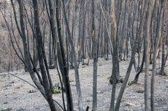 πυρκαγιές Στοκ εικόνα με δικαίωμα ελεύθερης χρήσης