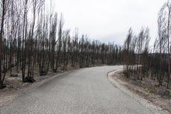 πυρκαγιές Στοκ εικόνες με δικαίωμα ελεύθερης χρήσης