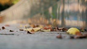 Πυροβολισμός κινηματογραφήσεων σε πρώτο πλάνο των φύλλων ανεμοστροβίλων στο πεζοδρόμιο Πεσμένα φύλλα στο πεζοδρόμιο φιλμ μικρού μήκους
