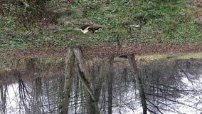 Πυροβολισμός με την περιστροφή Δέντρα φθινοπώρου από τον ποταμό Παγετοί φθινοπώρου Θλιβερός κρύος καιρός φιλμ μικρού μήκους