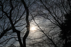 Πυροβολισμός σκιαγραφιών δέντρων στοκ φωτογραφία με δικαίωμα ελεύθερης χρήσης