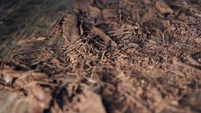 Πυροβοληθείς των τσιπ σοκολάτας απόθεμα βίντεο