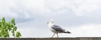 Πυροβολισμός λεπτομερειών καρτών πουλιών γλάρων Στοκ φωτογραφία με δικαίωμα ελεύθερης χρήσης