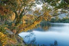 Πυροβολισμός λιμνών, εξέταση λιμνών, εξέταση δέντρων, φθινόπωρο, εξέταση ηλιοβασιλέματος, telese, campania, Ιταλία Στοκ Φωτογραφία