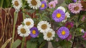 Πυροβολισμός λουλουδιών Στοκ φωτογραφίες με δικαίωμα ελεύθερης χρήσης
