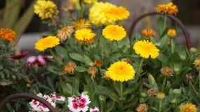 Πυροβολισμός λουλουδιών Στοκ Εικόνα