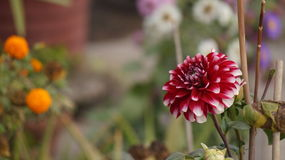 Πυροβολισμός λουλουδιών Στοκ Φωτογραφίες