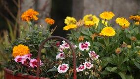Πυροβολισμός λουλουδιών Στοκ Εικόνες