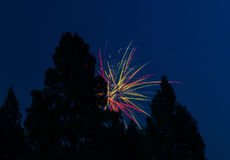Πυροτεχνήματα πίσω από μερικά σκιαγραφημένα δέντρα Στοκ Εικόνες