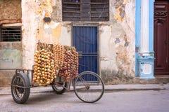 Πωλητής κρεμμυδιών σε μια οδό της παλαιάς Αβάνας Στοκ Εικόνα